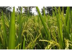 Data Logger Membantu Pertanian Untuk Menyelamatkan 7.5 Miliar Liter Air