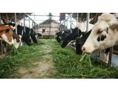 Manfaat Besar Melakukan Pemantauan Ternak Dengan Data Logger